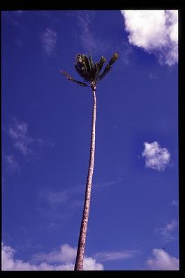 Hawaii028